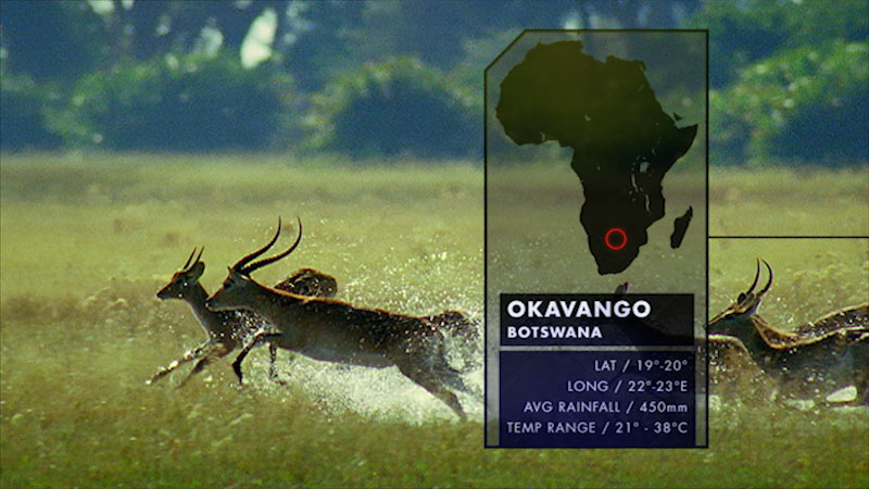 An area on the map of Africa is highlighted, with a group of deer running in the background. Caption: Okavango Botswana. Latitude, 19 degrees to 20 degrees. Longitude, 22 degrees to 23 degrees East. Average rainfall, 450 millimeters. Temperature range, 21 degrees to 38 degrees Celsius.