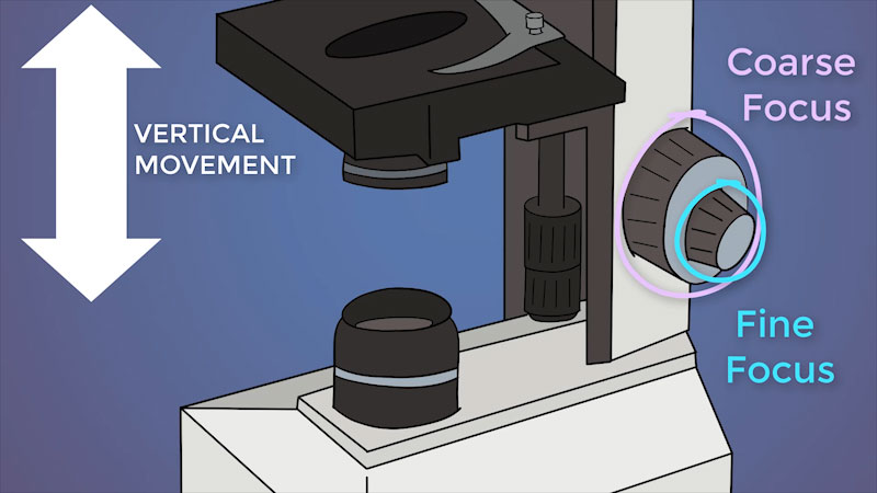 Still image from The Amoeba Sisters: Microscopes and How to Use a Light Microscope