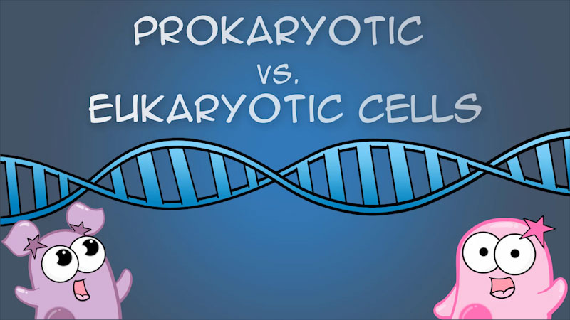 Still image from The Amoeba Sisters: Prokaryotic vs. Eukaryotic Cells