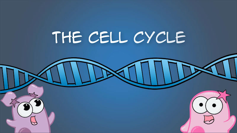 Still image from The Amoeba Sisters: The Cell Cycle (And Cancer)