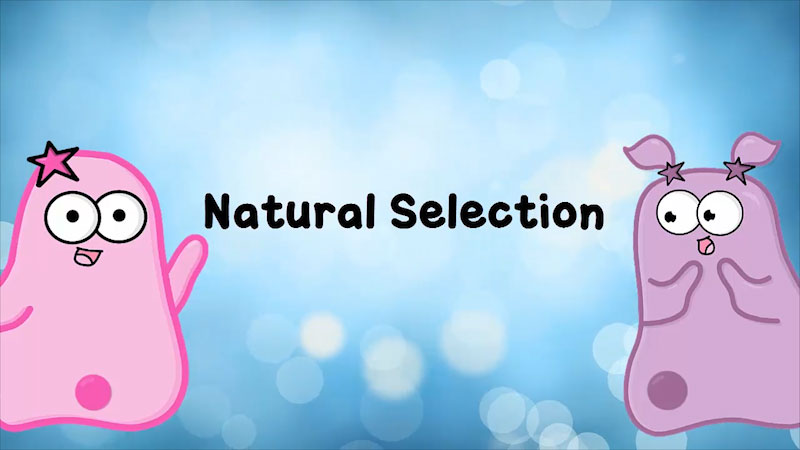 Still image from The Amoeba Sisters: Natural Selection