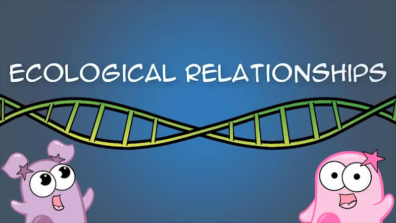 Two cartoon characters with a DNA strand. Ecological Relationships.