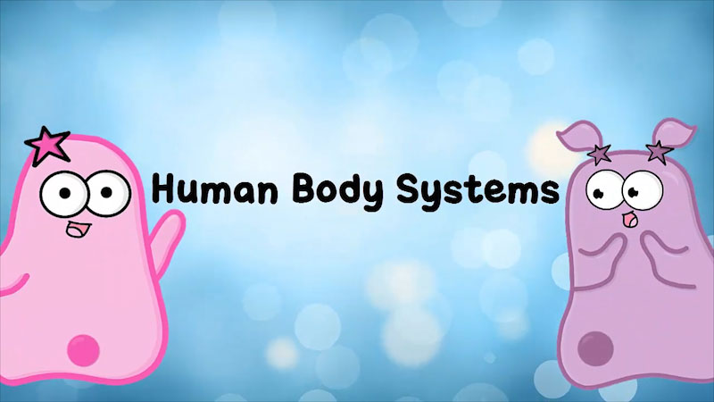 Two cartoon characters. Human Body Systems.