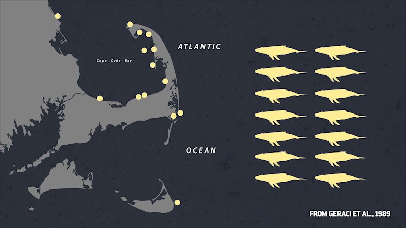 Still image from: Eons: How the Andes Mountains Might Have Killed a Bunch of Whales