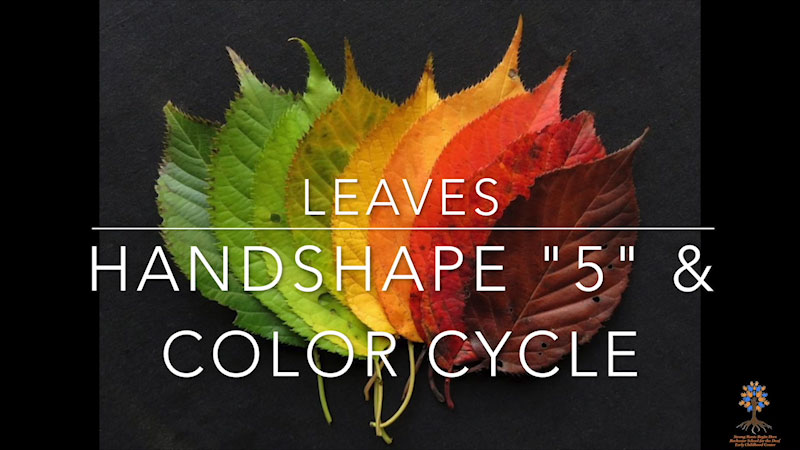 Still image from: Leaves Handshapes & Color Cycle