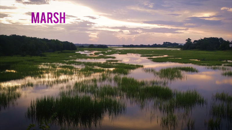 Still image from: Spot on Science: Mushy Gushy Bogs and Marshes