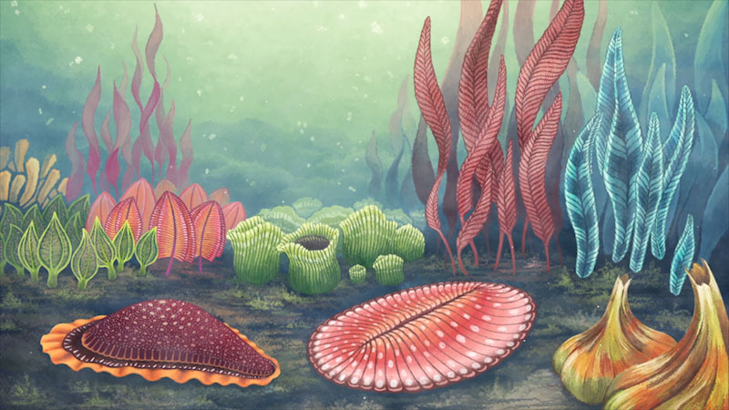 Still image from: Eons: How We Identified One of Earth's Earliest Animals
