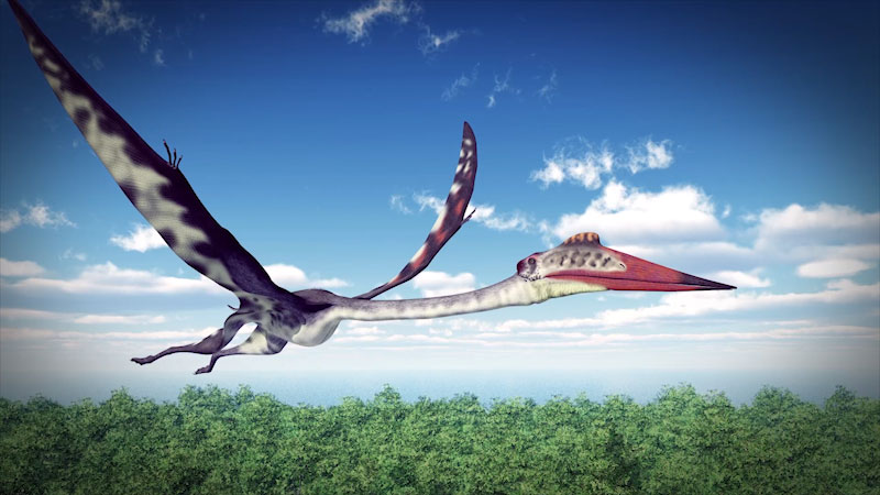 Still image from: It's Okay to Be Smart: How Did Giant Pterosaurs Fly?