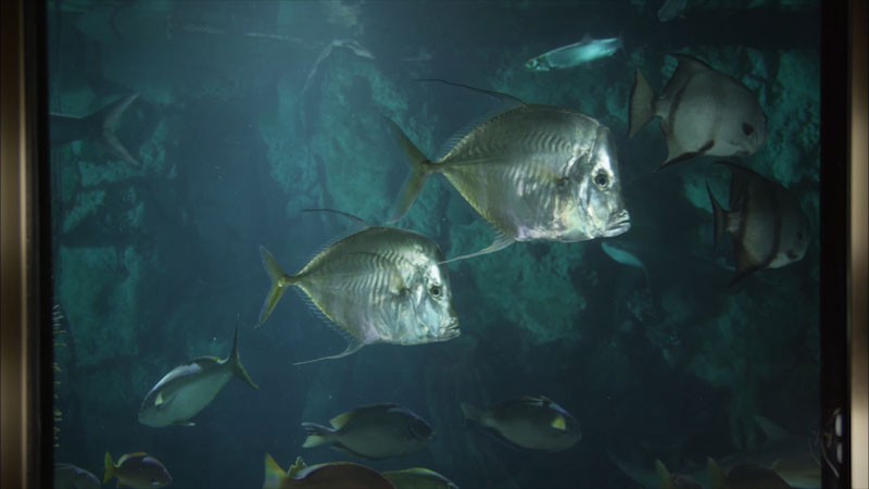 Still image from: Museum Access: The John G. Shedd Aquarium