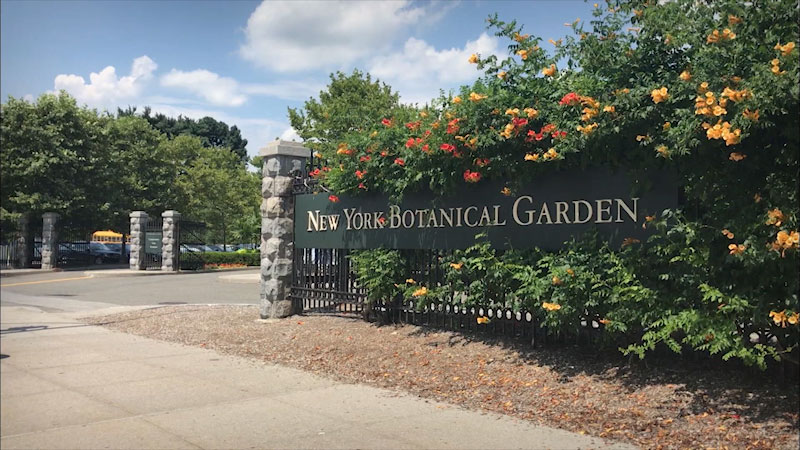 Still image from Museum Access: The New York Botanical Garden