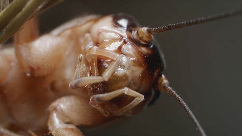 Still image from: Deep Look: Why Crickets Just Won't Shut Up