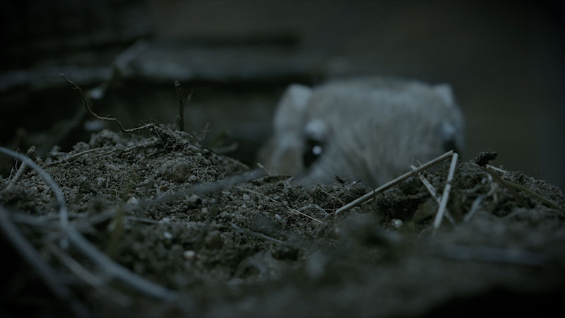 Still image from: Deep Look: Kangaroo Rats Are Furry, Spring-Loaded Ninjas