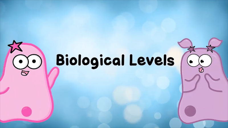 Still image from: The Amoeba Sisters: Biological Levels in Biology--The World Tour