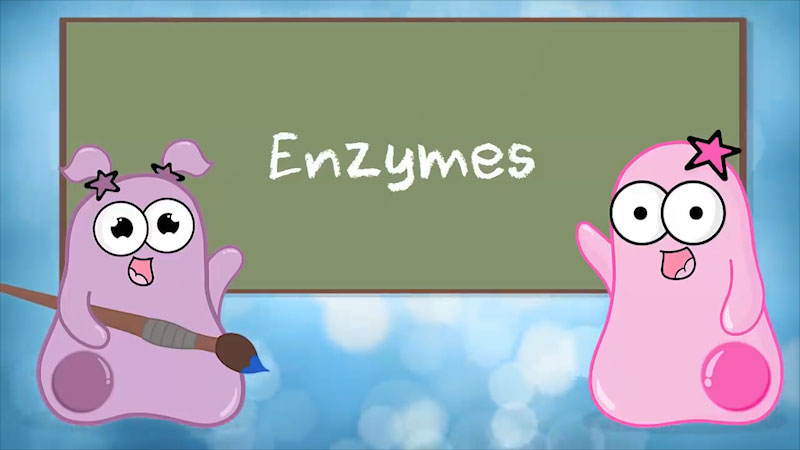 Still image from The Amoeba Sisters: Enzymes