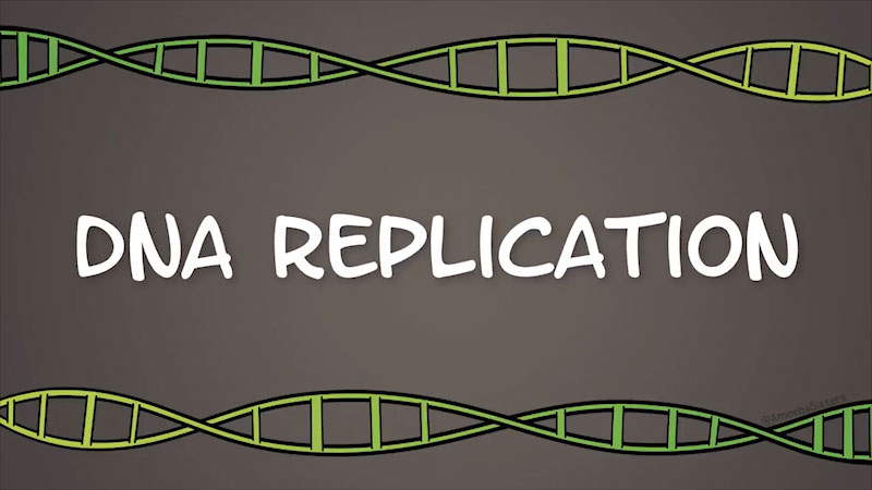 Still image from The Amoeba Sisters: DNA Replication