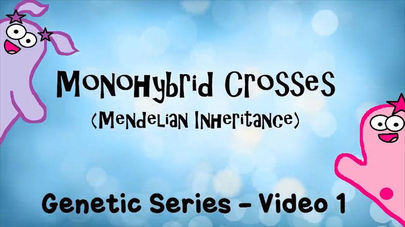 Still image from The Amoeba Sisters: Monohybrid Crosses (Mendelian Inheritance)