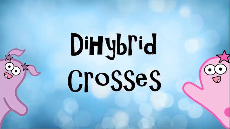 Still image from: The Amoeba Sisters: Dihybrid Crosses