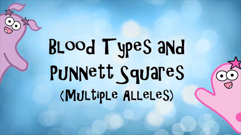 Still image from The Amoeba Sisters: Blood Types and Punnett Squares (Multiple Alleles)