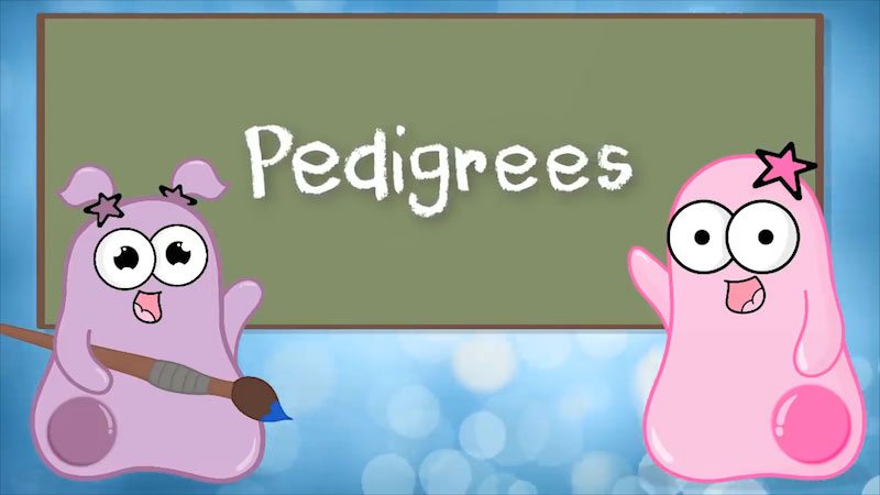 Still image from: The Amoeba Sisters: Pedigrees