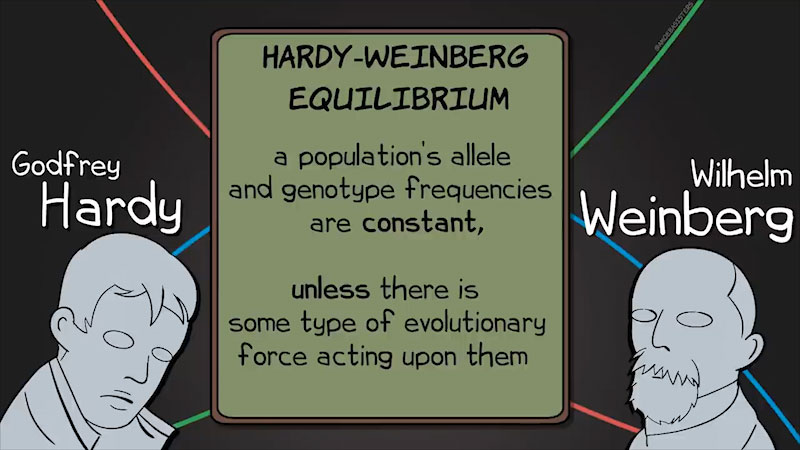 Still image from The Amoeba Sisters: Hardy-Weinberg Equilibrium