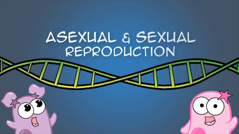 Still image from: The Amoeba Sisters: Asexual and Sexual Reproduction
