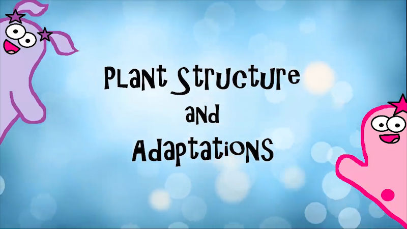 Still image from: The Amoeba Sisters: Plant Structure and Adaptations