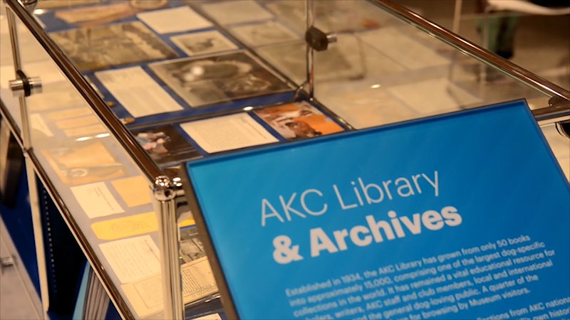 Still image from: Museum Access: The AKC Museum of the Dog
