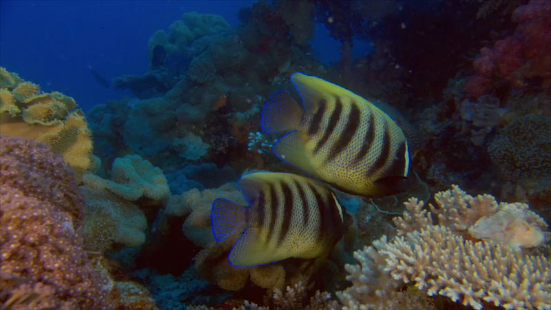 Still image from Climate Change and Coral Reefs: Introduction To Coral Reefs and Climate Change (Module 1)