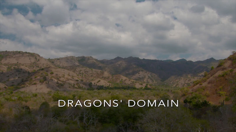 Still image from: Wildest Islands of Indonesia: The Dragon's Domain