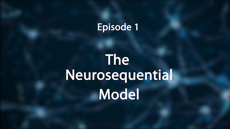 Still image from: Stress, Trauma, and the Brain: Insights for Educators--The Neurosequential Model