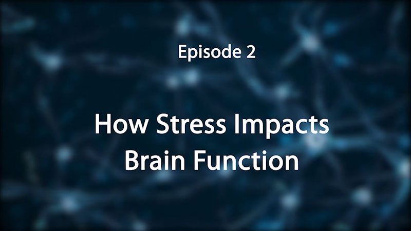 Still image from: Stress, Trauma, and the Brain: Insights for Educators--How Stress Impacts the Brain