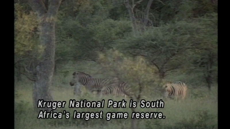 Still image from: South Africa: A Land Apart