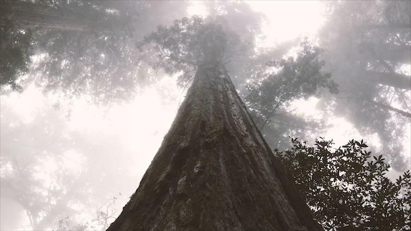 Still image from: Untold: Cellulose--From Trees to Explosives