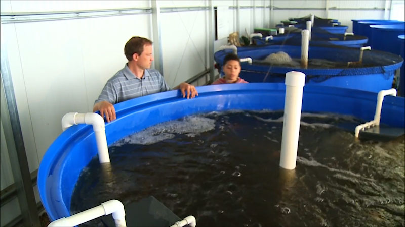 Still image from: Into the Outdoors: Aquaculture Science