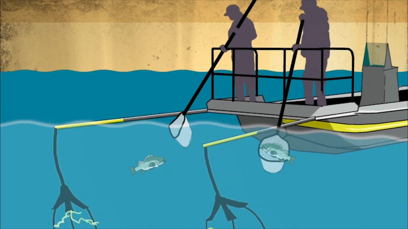 Still image from: Into the Outdoors: Sturgeon Conservation