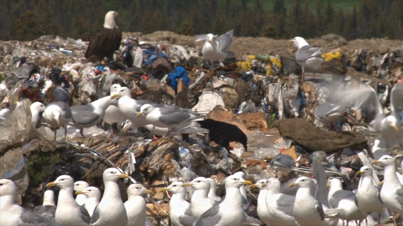 Still image from: Into the Outdoors: Unearthing Our Landfill Systems