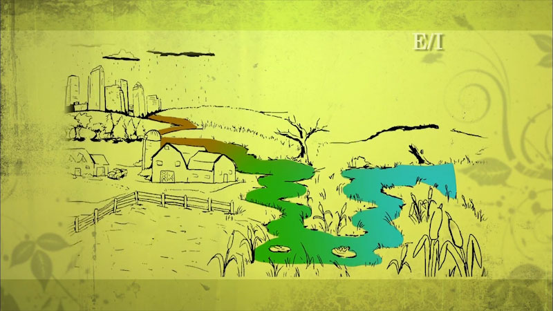 Still image from: Into the Outdoors: Wetlands Wisdom