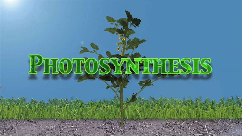 Still image from Into the Outdoors: The Simple Story of Photosynthesis and Food