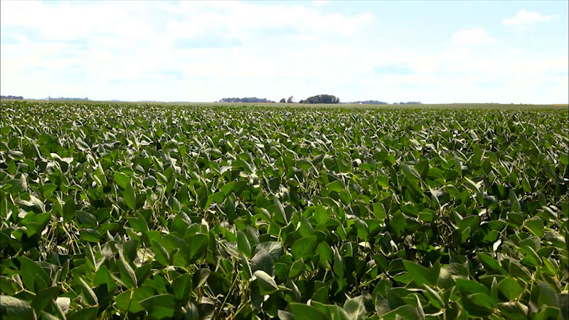 Still image from: Into the Outdoors: Soybean Sustainability