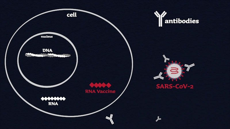 Still image from: What Is an RNA Vaccine?