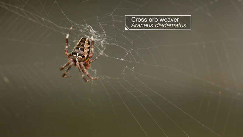 Still image from: Deep Look: Is a Spider's Web a Part of Its Mind?