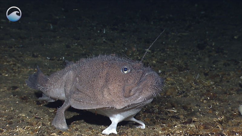 Still image from: Anglerfish-SP