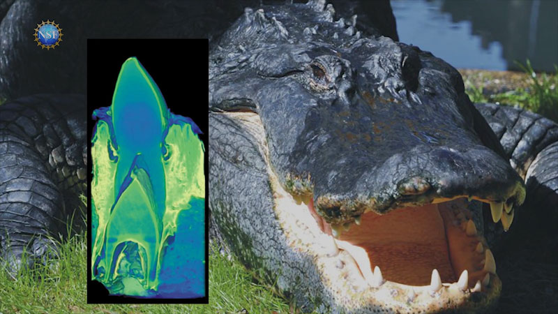 Still image from: 4 Awesome Discoveries You Probably Didn't Hear About This Week (Episode 32)