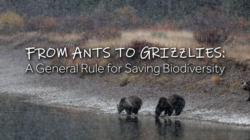 Still image from: From Ants to Grizzlies: A General Rule for Saving Biodiversity