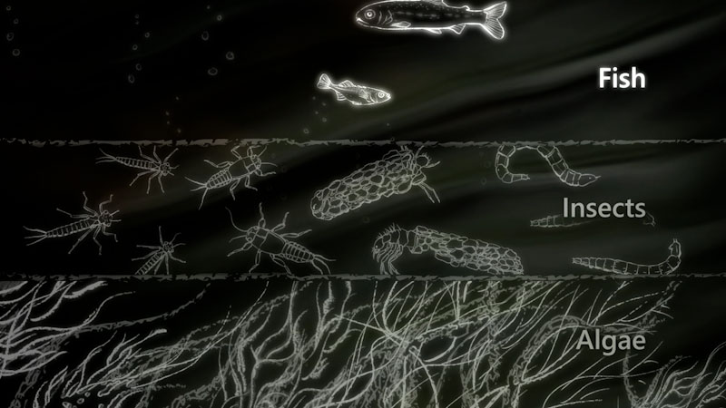 Still image from: Riverine Food Webs: How Flow Rates Affect Biomass