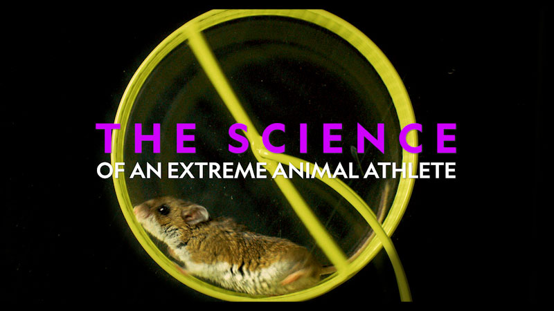 Still image from: The Science of an Extreme Animal Athlete