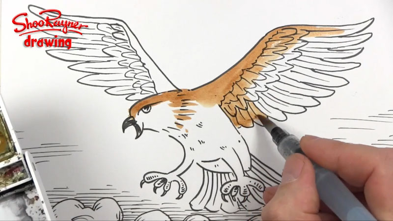 Still image from: How to Draw an Attacking Hawk