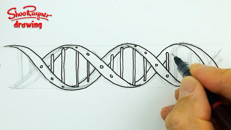Still image from: How to Draw the DNA Helix Correctly!