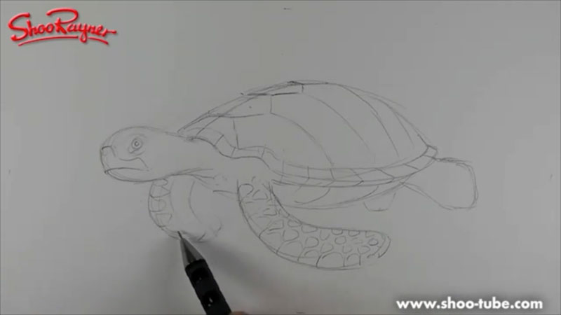 Still image from: How to Draw a Sea Turtle