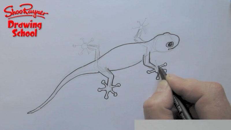 Still image from: How to Draw a Gecko